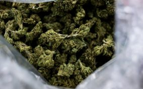 Marihuane (2)